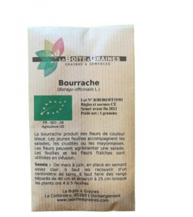 Graines de bourrache