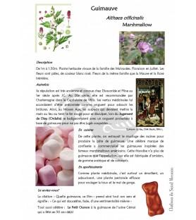 Guimauve plante
