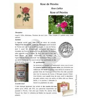 plante rose de provins