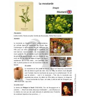 moutarde plante