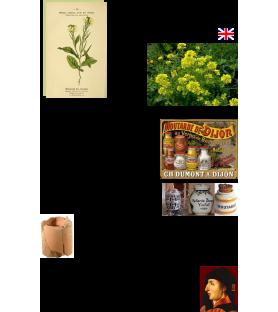 Graines Moutarde